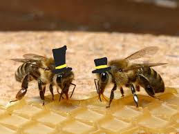 "The ""Bees of the Week"" as noted in the email sent out by Nathalie Gullo '22."